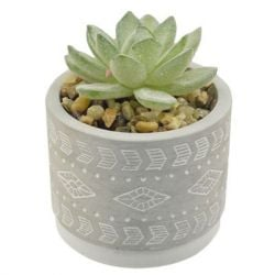 "Concepts in Time - Cement Pot Faux Succulent - 5""x 2"""